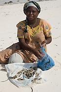 A local woman on the beach sorting clams.  Paje, Zanzibar, Tanzania