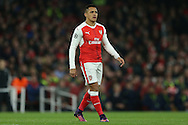 Alexis Sanchez of Arsenal looking on. UEFA Champions league group A match, Arsenal v Paris Saint Germain at the Emirates Stadium in London on Wednesday 23rd November 2016.<br /> pic by John Patrick Fletcher, Andrew Orchard sports photography.