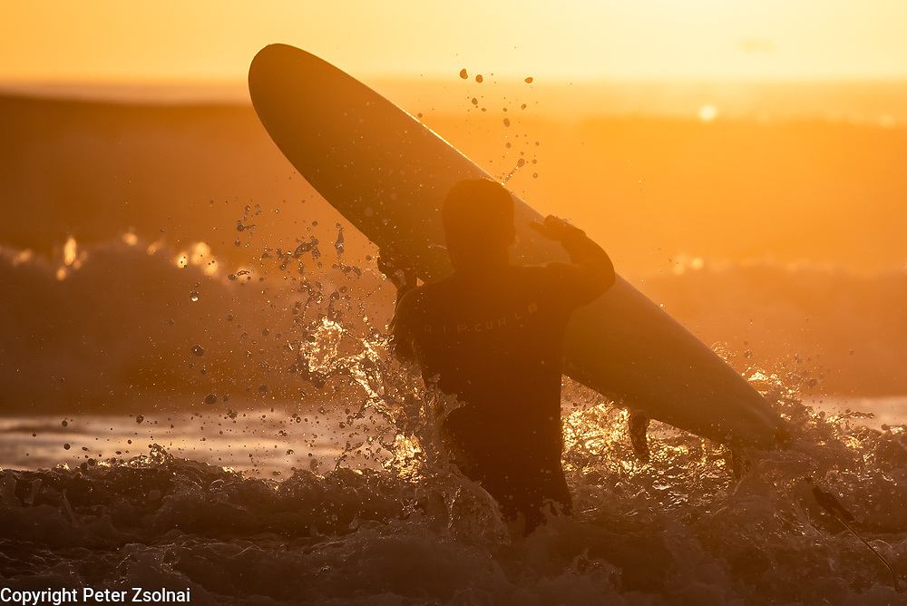 Surf rider is heading into the water to ride a wave during the setting sun in Porto, Portugal.