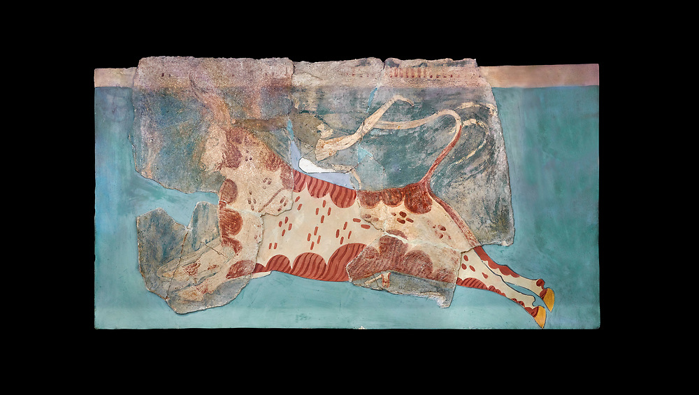 Mycenaean Fresco wall painting of a Mycanaean acrobat leaping over a bull, Early Palace,  Tiryns, Greece.  Athens Archaeological Museum. Black Background<br /> <br /> 14th  Cent BC.. Cat No 1595. The Mycenaean Fresco depicts an acrobat leaping over a charging bull whilst holding onto its horns. This ritual symbolised the struggle of domination of man over wild nature. .<br /> <br /> If you prefer to buy from our ALAMY PHOTO LIBRARY  Collection visit : https://www.alamy.com/portfolio/paul-williams-funkystock/mycenaean-art-artefacts.html . Type -   Athens    - into the LOWER SEARCH WITHIN GALLERY box. Refine search by adding background colour, place, museum etc<br /> <br /> Visit our MYCENAEN ART PHOTO COLLECTIONS for more photos to download  as wall art prints https://funkystock.photoshelter.com/gallery-collection/Pictures-Images-of-Ancient-Mycenaean-Art-Artefacts-Archaeology-Sites/C0000xRC5WLQcbhQ