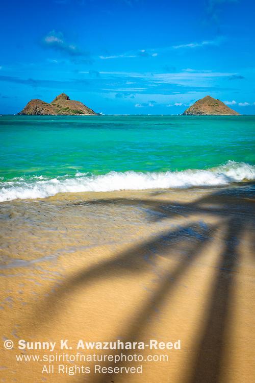 Palm tree shadows on Lanikai Beach with Mokulua Islands under blue sky. Kailua, Oahu Island, Hawaii. Vertical image.