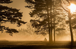 © Licensed to London News Pictures. 16/02/2016. Walton Heath, UK. A man cycles  with his dogs in tow near Walton Heath golf course as the sun rises.  Temperatures locally were as low as -5 centigrade. Photo credit: Peter Macdiarmid/LNP