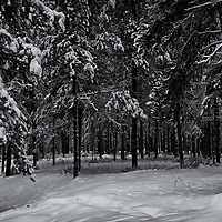 Winter shots 2013 K4IIs<br /> Converted to B&W 1/25/13