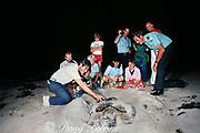 park rangers and volunteers examine loggerhead sea turtle, Caretta caretta, nesting during turtle walk program, Bill Baggs Cape Florida State Park, Key Biscayne, Miami, Florida ( Western Atlantic Ocean )