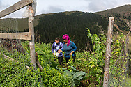 Yilmaz Civelek (centre left) 47, and his wife Esma (centre right) at home in Alaca Yaylası, harvesting some vegetables in their home village up in the Pontic mountains, where communicating via whistling is common, due to the large distances between homes, and the mountainous landscape.
