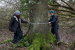 Denham, UK. 4 February, 2020. Activists from Save Colne Valley and Extinction Rebellion record the measurements and location of an ancient poplar tree in an area designated for the HS2 high-speed rail link next to the river Colne in Denham Country Park. Planned works in the immediate vicinity are believed to include the felling of 200 trees and the construction of a roadway, Bailey bridge, compounds, fencing and a parking area.