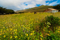 Garrapata State Park, Monterey County, California USA