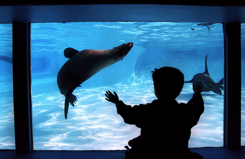 csz010705.001.001.jpg. Digicam000. The Melbourne Zoo's seal pool has gone through a renovation. Pic By Craig Sillitoe melbourne photographers, commercial photographers, industrial photographers, corporate photographer, architectural photographers, This photograph can be used for non commercial uses with attribution. Credit: Craig Sillitoe Photography / http://www.csillitoe.com<br /> <br /> It is protected under the Creative Commons Attribution-NonCommercial-ShareAlike 4.0 International License. To view a copy of this license, visit http://creativecommons.org/licenses/by-nc-sa/4.0/.