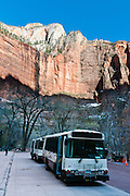 """Handy free shuttle buses drive visitors to scenic stops (such as here at """"The Temple of Sinawava"""") through Zion National Park and Springdale, in Utah, USA. Travel on the scenic six-mile Zion Canyon Scenic drive is now thankfully closed to private cars and limited to buses, thereby reducing traffic and improving visitor experience. Visiting the canyon is now much more relaxing compared to when cars fought for space on the narrow Scenic Drive. The North Fork of the Virgin River carved spectacular Zion Canyon through reddish and tan-colored Navajo Sandstone up to half a mile (800 m) deep and 15 miles (24 km) long. Uplift associated with the creation of the Colorado Plateaus lifted the region 10,000 feet (3000 m) starting 13 million years ago. Zion and Kolob canyon geology includes 9 formations covering 150 million years of mostly Mesozoic-aged sedimentation, from warm, shallow seas, streams, lakes, vast deserts, and dry near-shore environments. Mormons discovered the canyon in 1858 and settled in the early 1860s. U.S. President Taft declared it Mukuntuweap National Monument in 1909. In 1918, the name changed to Zion (an ancient Hebrew name for Jerusalem), which became a National Park in 1919. The Kolob section (a 1937 National Monument) was added to Zion National Park in 1956. Unusually diverse plants and animals congregate here where the Colorado Plateau, Great Basin, and Mojave Desert meet."""