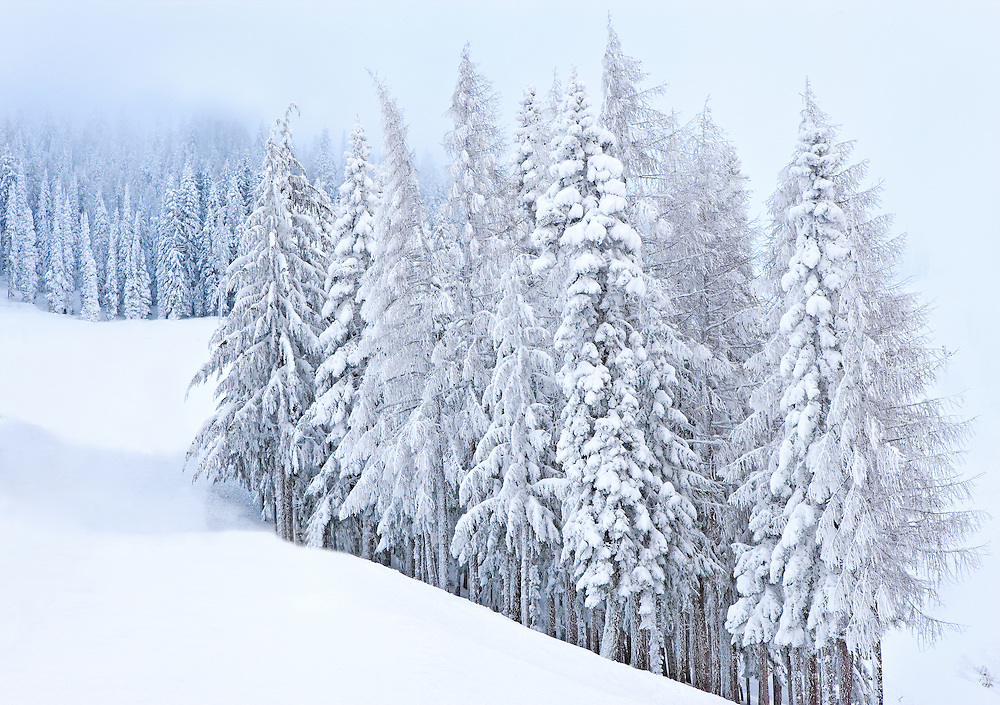 Quiet Winter Forest on Mountainside, Spokane, Washington