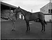 "19/01/1960.01/19/1960.19 January 1960.""Another Flash"" with trainer P. Sleator at his stables at Grange Co. Wicklow."