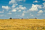 swathing wheat<br /> Morin<br /> Alberta<br /> Canada