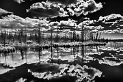 Clouds and boreal forest reflected in wetland<br />Near Yellowknife<br />Northwest Territories<br />Canada