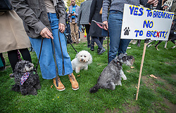 "© Licensed to London News Pictures. 07/10/2018. London, UK. Dogs stand with their pro-remain owners during a rally in Parliament Square to demand a ""People's Vote"" on the final Brexit agreement.  Photo credit: Peter Macdiarmid/LNP"