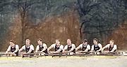 London, Great Britain, <br /> <br /> 147th Oxford vs Cambridge Varsity Boat Race, Over the Championship Course, Putney To Mortlake. 24.03.2001<br /> <br /> [Mandatory Credit: Peter SPURRIER/Intersport Images]<br /> <br /> Crews. <br /> <br /> Oxford UBC. Bow. Robin BOURNE-TAYLOR,  MF BONHAM, EB LILLEAHI, Ian WEIGJELL, Dan SNOW, Brian PALM. Matt SMITH cox JC MONCRIEFF. [Mandatory Credit; Peter SPURRIER/Intersport Images]<br /> <br /> 20010324 University Boat Race, Putney to Mortlake, London, Great Britain.