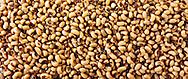 Raw Black eyed Beans