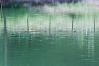 images reflected on green water of a pond, trees and fog in a pastel tone color