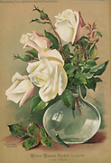 Hand painted and coloured Bouquet of white roses 1900. Rosen-Zeitung, Organ des Vereins Deutscher Rosenfreunde, 1887 [Periodical of the German Rose Society (Vereins Deutscher Rosenfreunde)] by C. P. Strassheim