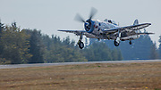 Republic P47 Thunderbolt of the Flying Heritage Collection landing.