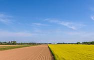 Yellow Farm Field, Riverhead, NY