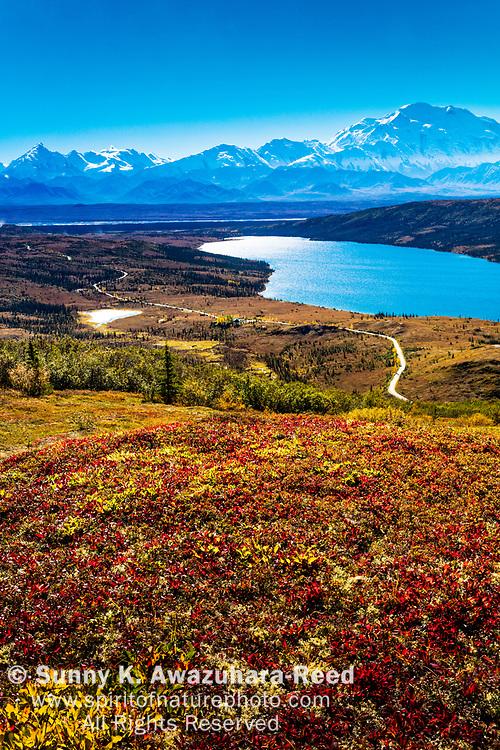 Aerial view of Mt. Denali and Wonder Lake with vivid fall color tundra hill under blue sky. Denali National Park & Preserve, Interior Alaska, Autumn. Vertical image.