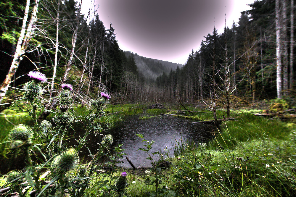 Deciduous Rainforest on the Olympic Peninsula