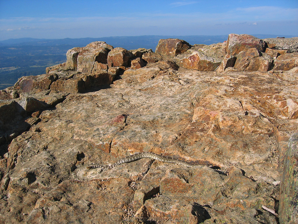 Rattlesnake on summit of Mt. St. Helena, Napa Valley, CA.
