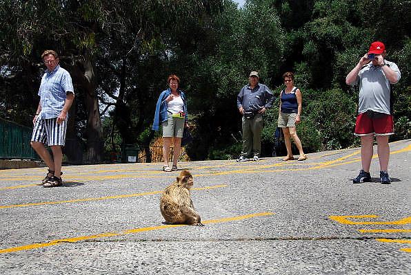 Spanje, Gibraltar, 7-6-2006..Apen leven wild op de rots van Gibraltar. Toeristen bekijken ze nieuwsgierig. Toerisme...Foto: Flip Franssen