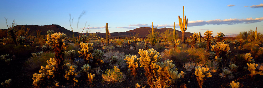MEXICO, NORTH, SONORA Pinacate National Park in Sonoran Desert