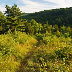 The Appalachian Trail on Tyringham Cobble, Tyringham, Massachussets.
