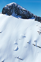 A snowboarder carves turns in the Jackson Hole backcountry, Jackson Hole, Wyoming.