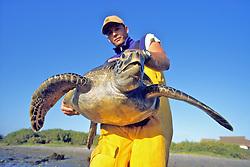 J. Nichols Holding Black Sea Turtle
