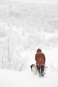 A dog musher drives Alaskan huskies through the countryside near Karasjok, Finnmark region, northern Norway