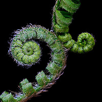 Ferns & Mosses