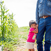 082515       Cable Hoover<br /> <br /> Two-year-old Haley Etsitty clings her grandfather's hand as they walk through the cornfield of the family farm in Shiprock Tuesday.