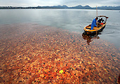 Colorful Fallen Leaves Decorate West Lake