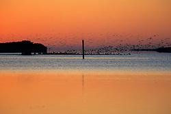 Dawn & Flock Of Birds In The Everglades