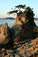 Japanese Pine Tree, Shonan Coast - one of the most poignant scenes at Morito Shrine in Hayama, just next to Morito Beach - one of the best beches in Japan.