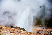 Steamboat Geyser in the Norris Geyser at Yellowstone National Park.