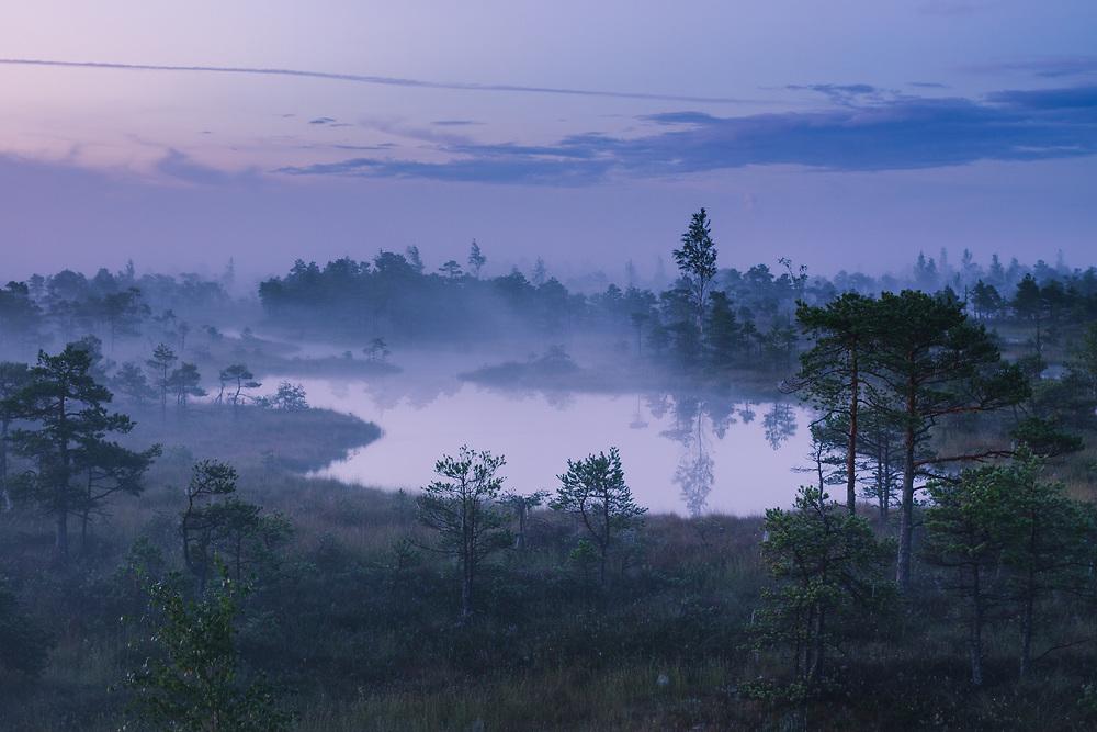 Blue hour and lite fog over the bog pool - small lake in Lielais Ķemeru tīrelis, Kemeri National Park (Ķemeru Nacionālais parks), Latvia Ⓒ Davis Ulands   davisulands.com
