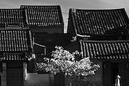 Vietnam Images-People-Cultural-Hoi An hoàng thế nhiệm