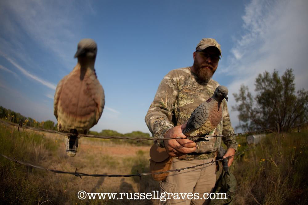 DOVE HUNTER PLACING DECOYS ON A FENCE