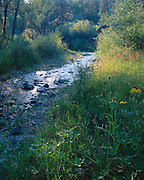 A summer morning on the Blue River in the White Mountains of Arizona