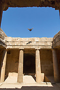 Pigeon flying over old ruins captured from low angle, Paphos Archaeological Park, Paphos, Cyprus