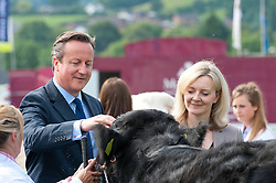 © Licensed to London News Pictures. 21/07/2014. Llanelwedd, UK. British PM David Cameron and new Secretary of State for Environment, Food and Rural Affairs, Liz Truss visits the cattle ring at the show. A record numbers of visitors in excess of 240,000 are expected this week over the four day period of Europe's largest agricultural show. Livestock classes and special awards have attracted 8,000 plus entries, 670 more than last year. The first ever Royal Welsh Show was at Aberystwyth in 1904 and attracted 442 livestock entries. Photo credit: Graham M. Lawrence/LNP