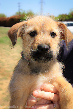 Second Chance SPCA Plano Texas rescue dogs available for adoption.