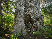Collecting honey in a baobab trunk. The Hadza camp of Senkele.