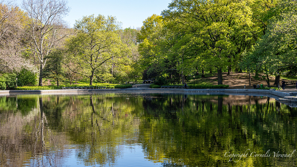 The Conservatory Water a.k.a. The Sailboat Pond in Central Park today May 13, 2020.