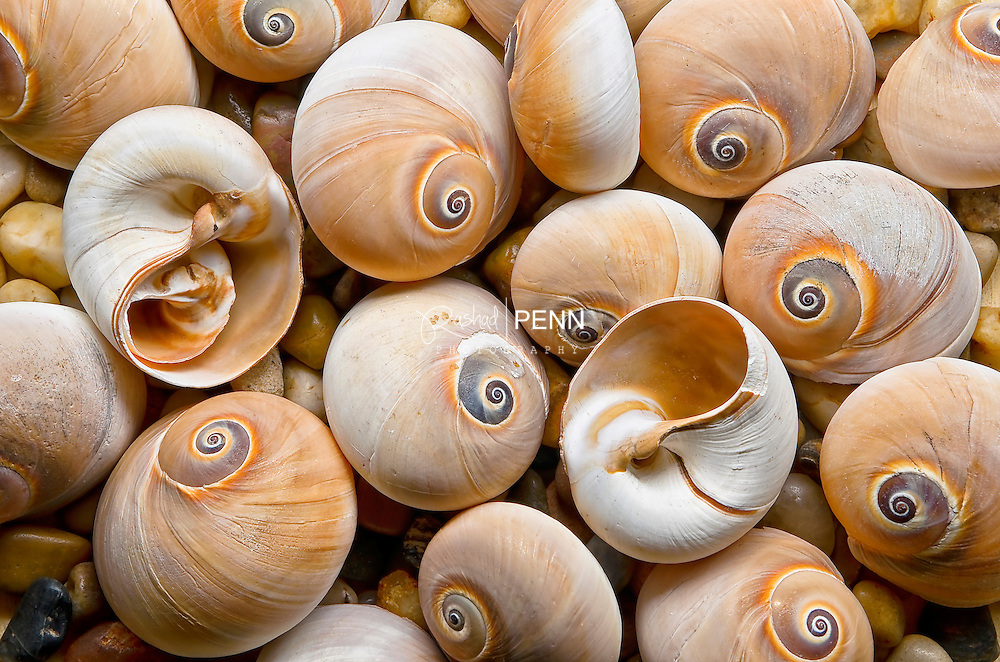Colorful Shells all gathered together