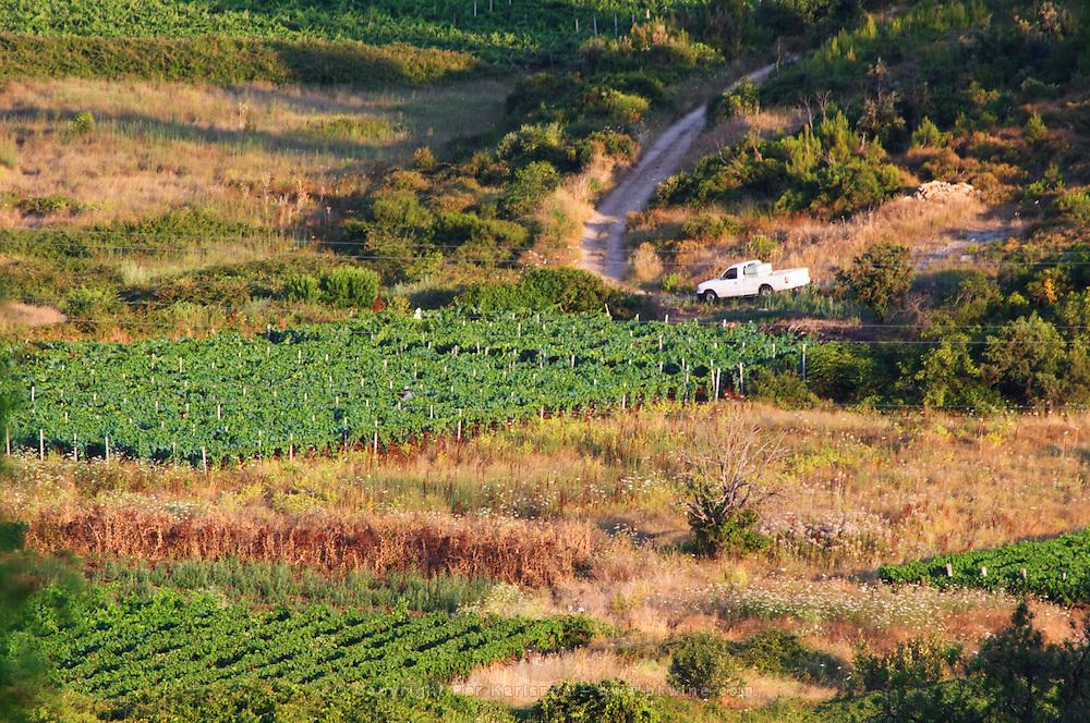 View over Smokvica vineyards on Korcula from the Toreta Winery. Toreta Vinarija Winery in Smokvica village on Korcula island. Vinarija Toreta Winery, Smokvica town. Peljesac peninsula. Dalmatian Coast, Croatia, Europe.